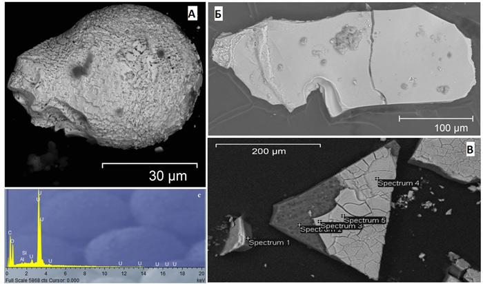 Электронные микрофотографии частиц, содержащих уран (А), кобальт (Б) и европий (В). В левом нижнем углу результаты рентгеновского микроанализа состава топливной частицы А, показывающие наличие урана. (Фото: ScientIfIc Reports, 2017, 7: 11132.)