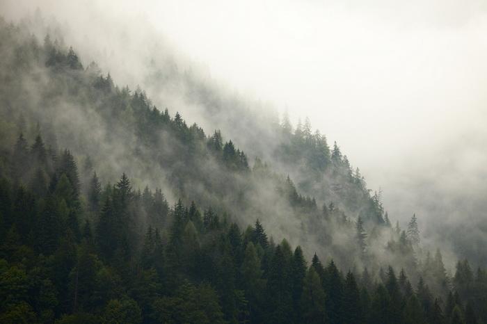 Земной климат спасут полтриллиона деревьев...