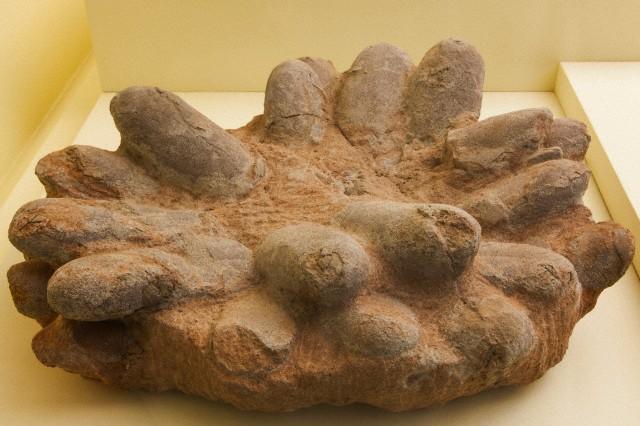 Ископаемая кладка динозавра. (Фото Steven Vidler / Corbis.)