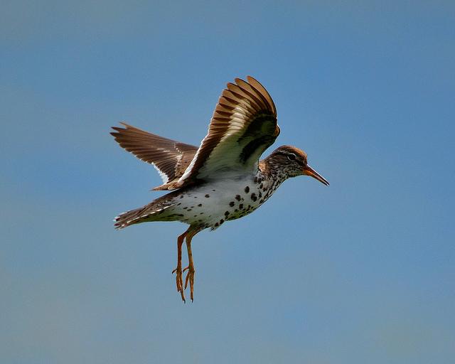 Почему у птиц разные яйца | Наука и жизнь