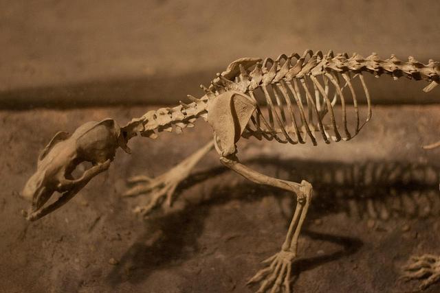 Собаки эволюционировали с похолоданием