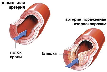 диетолог николаев