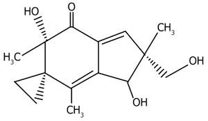 Антибиотик иллудин из пластинчатого гриба омфалотуса признан перспективным для противоопухолевой терапии.