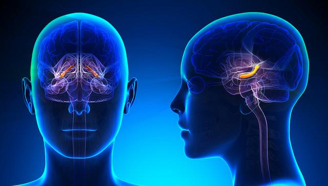 Расположение гиппокампа в мозге человека. (Фото: Dr. Curtis Cripe / Flickr.com)
