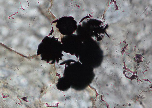 В Канаде снова нашли древнейшие следы жизни   Наука и жизнь