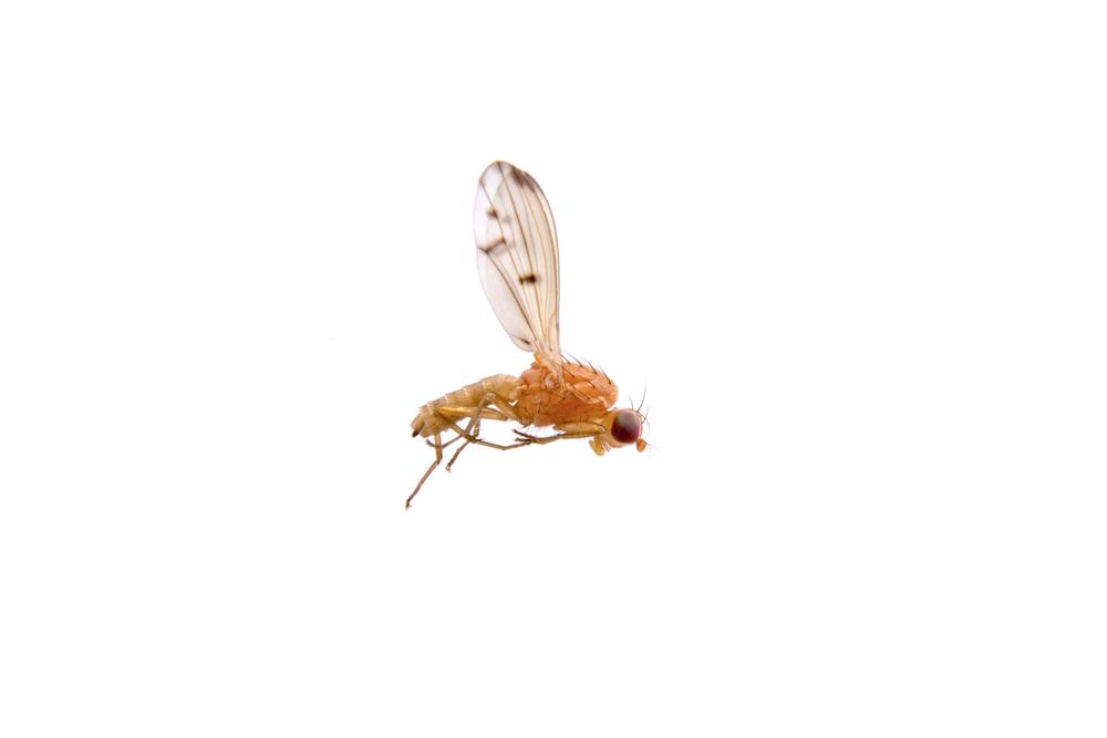 Как летает муха | Наука и жизнь