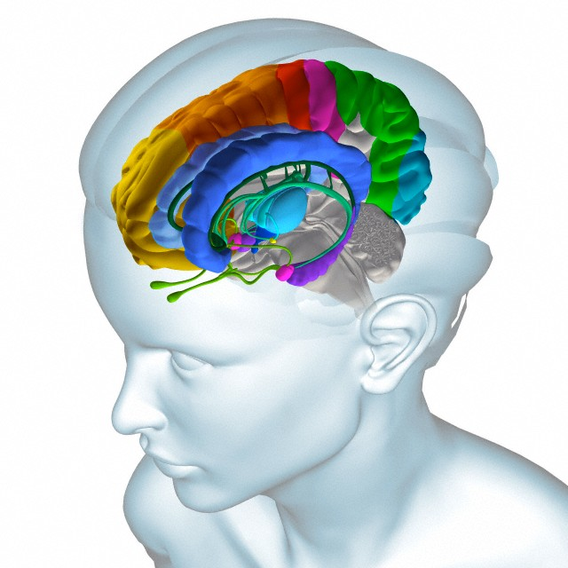 Специальные нейроны помогают нам обдумывать чужой опыт