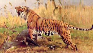 люди родившиеся в год тигра под знаком тельца