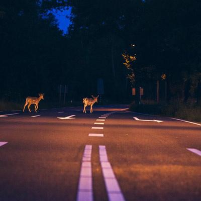 Животные уходят от людей в ночь