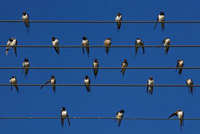 Электромагнитный шум мешает птицам