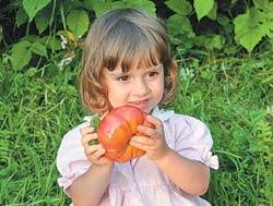 В руках у маленькой соседки Ю. Ушакова помидор-гигант сорта Розовый.