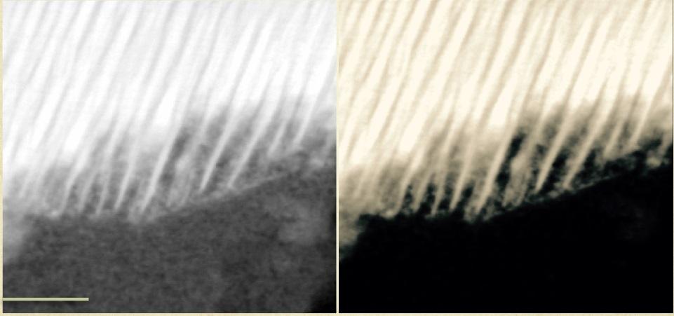 Неорганическая органика на Марсе