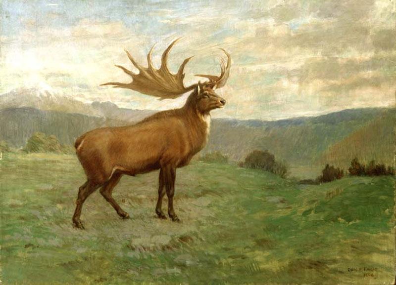 НаСтаврополье отыскали останки старинного большерогого оленя