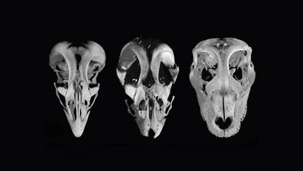 череп форма фото