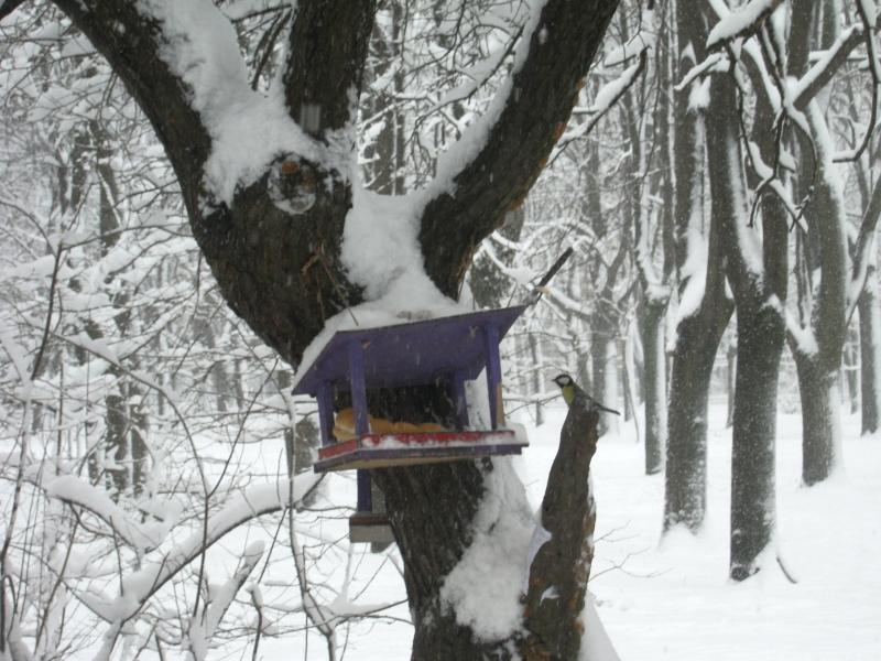 Фото кормушки своими руками на дереве