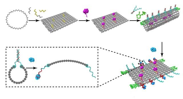 Схема действия ДНК-робота: на лист из ДНК садится тромбин (фиолетовый), лист сворачивается в трубку и застегивается ДНК-застежками. Встретившись с раковым белком (голубой), трубка раскрывается. (Иллюстрация: S. Li et al., Nature Biotechnology, 2018)