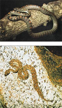 Змеи в ми�а� и змеи в жизни К�л�� змеи в Индии На�ка и