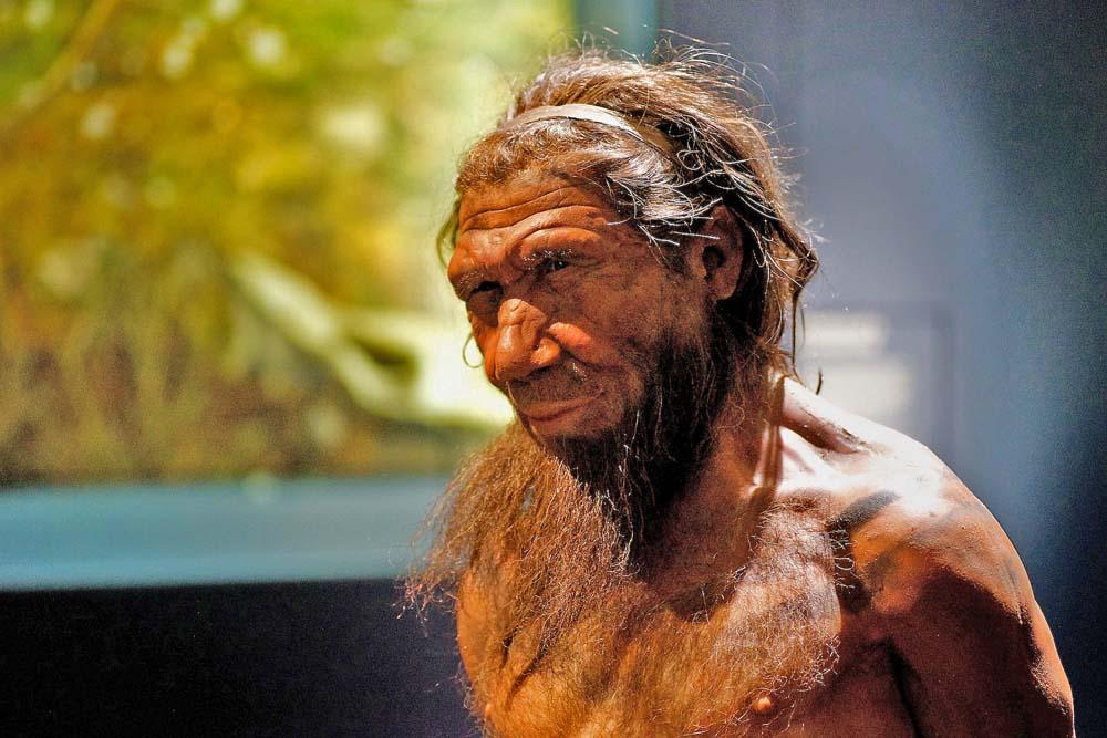 Неандертальская грудь