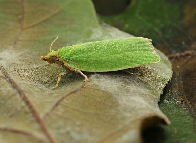 Количество насекомых-вредителей можно оценить по древесине
