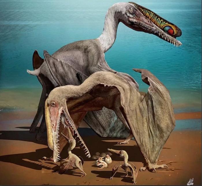 Древнейшие птерозавры заботились о собственных беззубых птенцах— Ученые