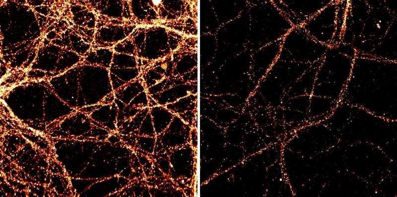 клетки днк фото