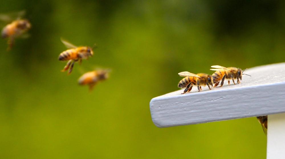 Асоциальные пчелы похожи на аутистов   Наука и жизнь