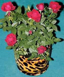 Лавр благородный цветок 144