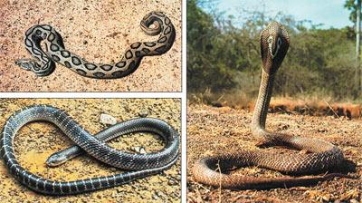 секс роскас с змеями