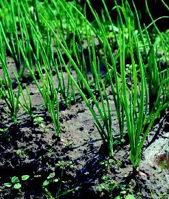 Огород без перекопок высокие грядки