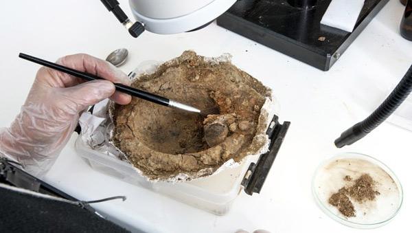 В погребении викинга в Норвегии нашли мусульманские монеты