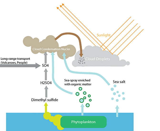 как сделать фитопланктон на толстолобика
