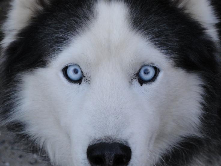 Ученые: Люди приручили собак два раза