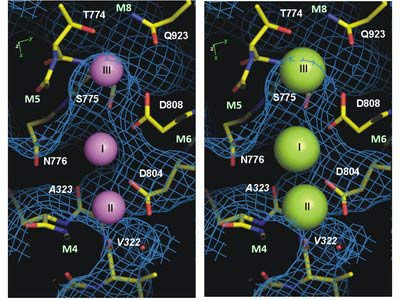 Кристаллическая структура клеточного Na/K-насоса