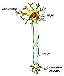 http://www.nkj.ru/upload/iblock/9bc83bd4764fbcd663556ddc652d4c67.jpg