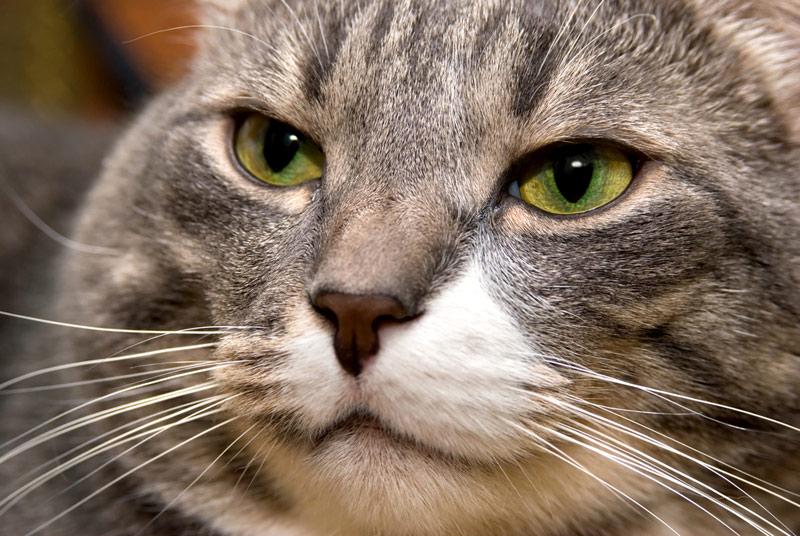 Кошкам морда не помеха | Наука и жизнь