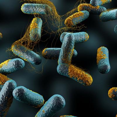 Бактерии рода Clostridia, обычные обитатели пищеварительной системы. (Фото Argonne National Laboratory / Flickr.com.)