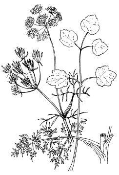 знакомые и незнакомые растения