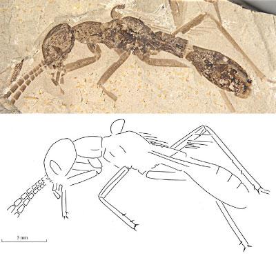 Таракан, который хотел быть муравьем
