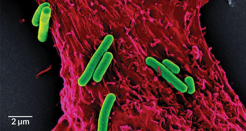 Цианобактерии дают сердцу дышать | Наука и жизнь