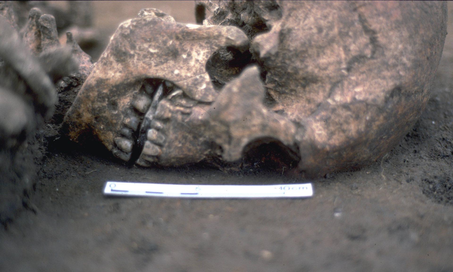 В Англии нашли погребение человека без языка | Наука и жизнь