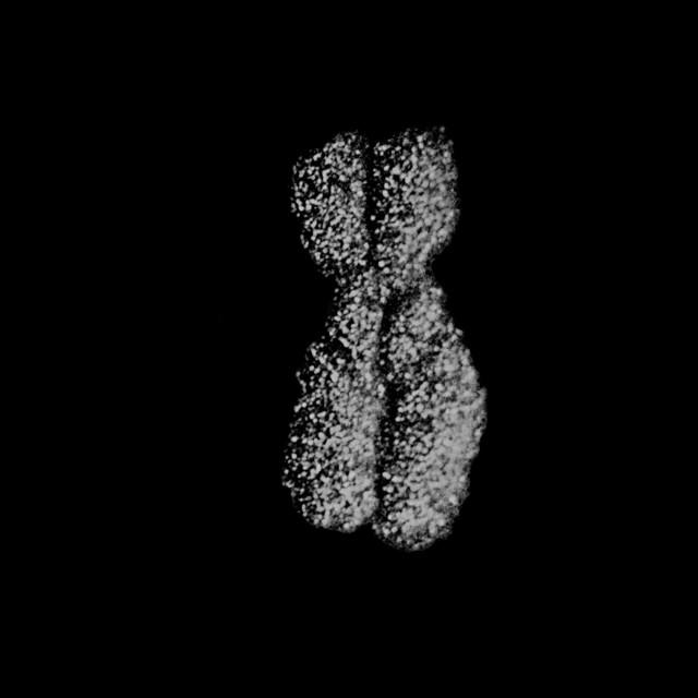 Чем занимались биологи в 2016 году – часть вторая   Наука и жизнь