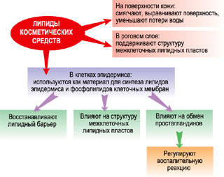 e1259a311ae97ebe5339cfd3f136ed89.jpg