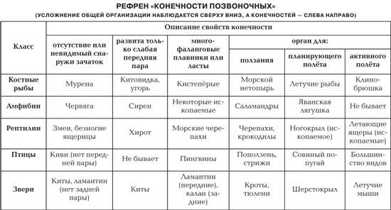 Таблица происхождение человека