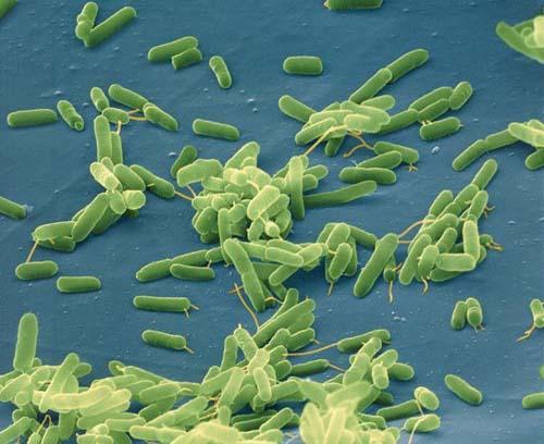 Как бактерии управляют нашими генами
