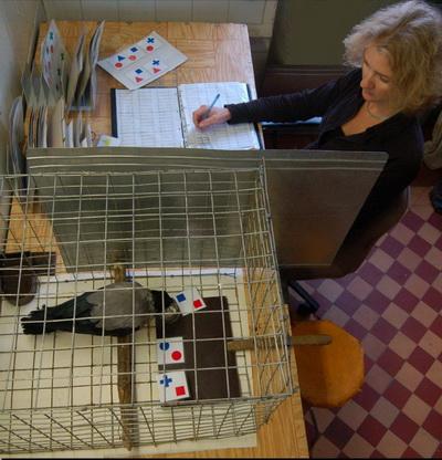 Анна Смирнова и ворона с карточками. (Фото - МГУ)