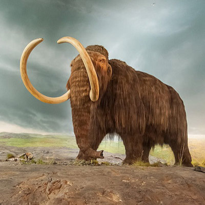 Доисторических гигантских зверей истребили люди