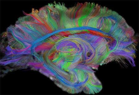 Как мозг отличает виденное от невиденного | Наука и жизнь