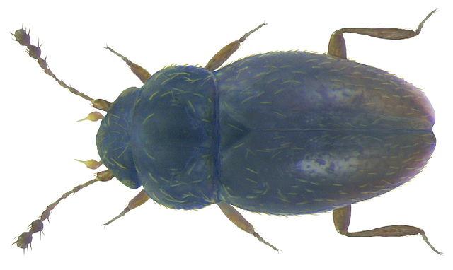 Как насекомые становятся маленькими