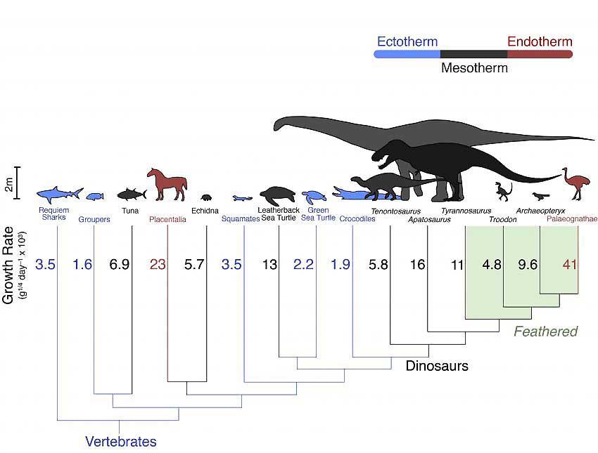 Рептилии это животные эндотермные