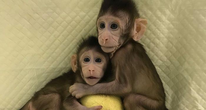 обезьяны.png